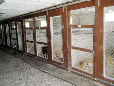 Poughkeepsie Kennel