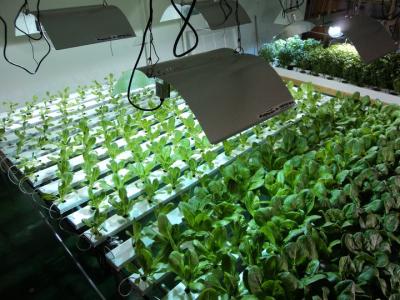 Sweet greens hydroponics equipment supplier for Indoor gardening nutrients