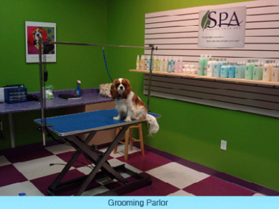 4 paws pet groomer spartanburg sc 29301 solutioingenieria Images